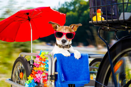 fast  and speedy jack russell dog on a bike trailer on summer vacation , with owner ready for the beach with towel  , umbrella and sunglasses