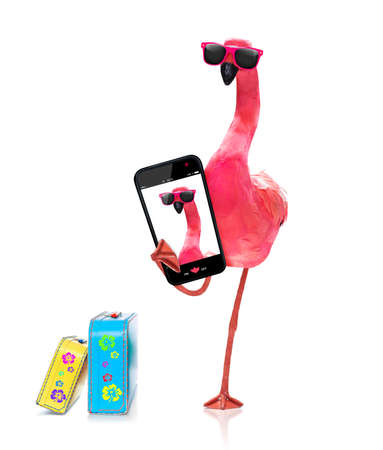 pink gay flamingo taking a selfie, on summer vacation holidays, isolated on white background