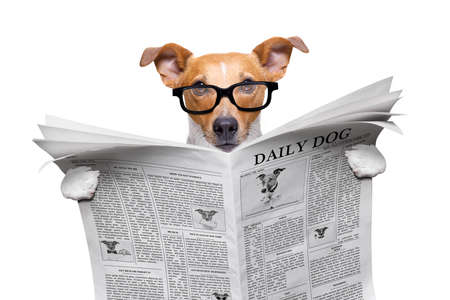 cool funny jack russell  dog reading a newspaper magazine