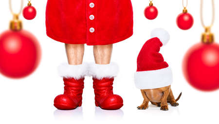 funny dachshund sausage  santa claus dog on christmas season holidays wearing red holiday hat, isolated on white background, with owner and red boots