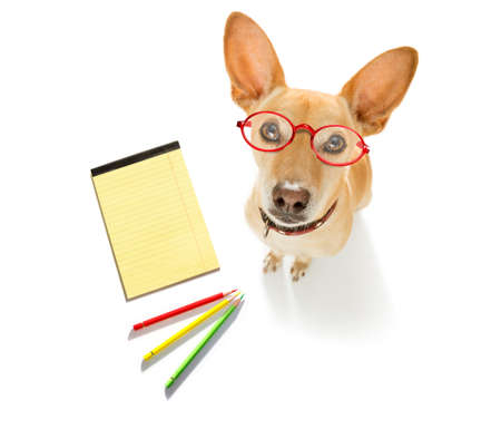 office worker businessman dog with telephone, phone  notepad, pencil, isolated on white background Stock Photo
