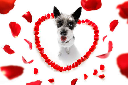 Dog in love for happy valentines day with petals and rose flower