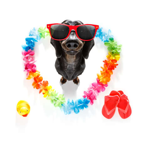 Dachshund  dog in love for happy valentines day with rainbow  flower chain in heart shape