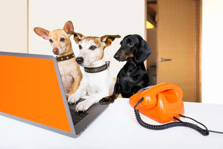 Team or couple of dogs  with glasses as secretary or operator with red old  dial telephone or retro classic phone and pc laptop computer