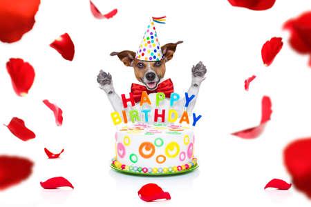Alles Gute zum Geburtstag Jack Russell Hund mit einem Geschenk oder Geschenk mit vielen Rosen, die in Liebe zum Valentinstag oder Jubiläum herumfliegen, isoliert auf weiß Standard-Bild