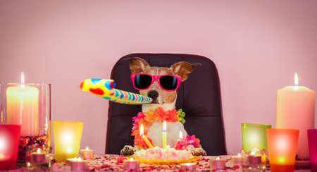Gelukkige jack russell-hond met een feestje met kronkelige slingers, voor verjaardag en het blazen op een fluithoorn