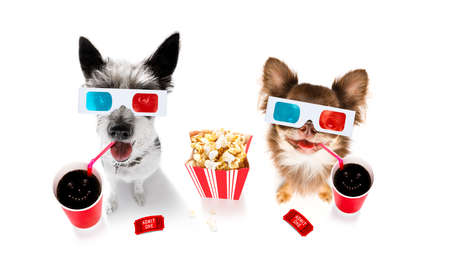 Chihuahua poodle dog going to the movies with soda and glasses and popcorn and tickets 写真素材