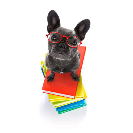 French bulldog  dog witH a tall stack of books