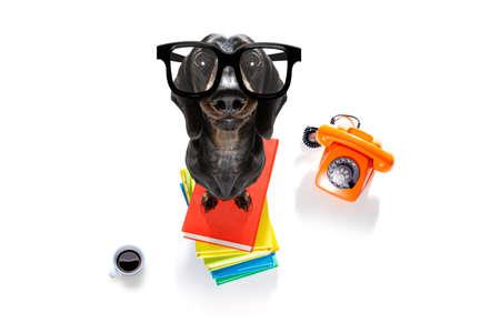 Wurstdackelhund mit einem hohen Bücherstapel Standard-Bild