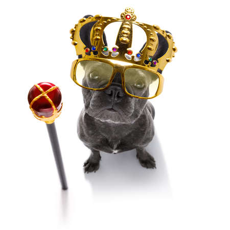 French bulldog dog as king with crown