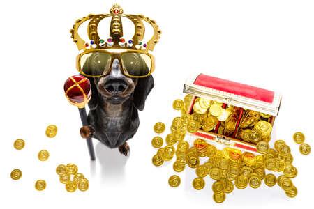 Sausage dachshund dog as king with crown Фото со стока