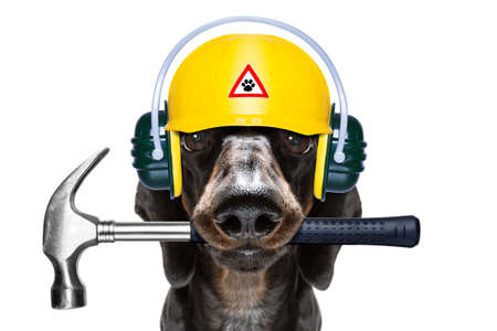 Handyman sausage dachshund dog worker with helmet and tools in mouth
