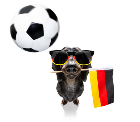 Soccer football sausage dachshund dog playing with leather ball