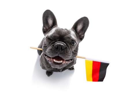 Fußball-Fußball französische Bulldogge Hund spielt mit Lederball, isoliert auf weißem Hintergrund und deutscher Flagge Standard-Bild