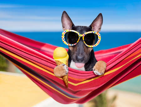 bull Terrier dog resting and relaxing on a hammock or beach chair under umbrella at the beach ocean shore, on summer vacation holidays eating a waffle cone of vanilla ice cream