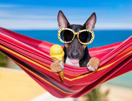 Bull Terrier Hund ruht und entspannt sich auf einer Hängematte oder einem Strandstuhl unter einem Sonnenschirm am Strand des Ozeans, in den Sommerferien einen Waffelkegel Vanilleeis essen?