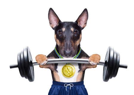 Perro como entrenador personal con medalla de oro levantando una barra con mancuernas con pantalones cortos deportivos