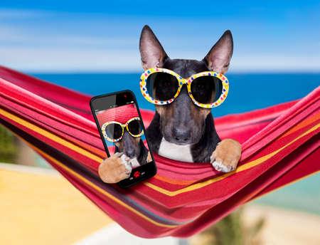 Bull Terrier Hund ruht und entspannt sich auf einer Hängematte oder einem Strandstuhl unter einem Sonnenschirm am Strand des Ozeans, in den Sommerferien, die ein Selfie mit Smartphone oder Telefon machen taking