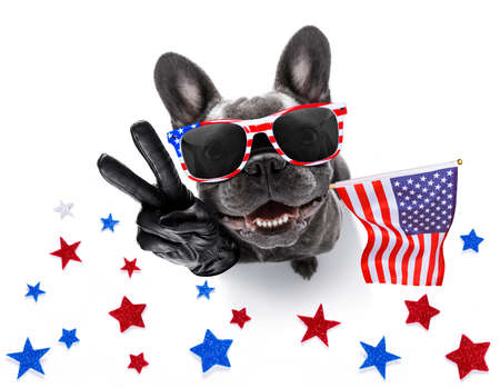 french bulldog waving a flag of usa and victory or peace fingers on independence day 4th of july with sunglasses 免版税图像 - 124867800
