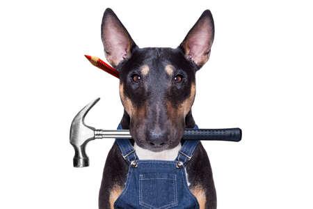 Handwerker Pit Bull Terrier Hundearbeiter mit Arbeitswerkzeug im Mund, bereit zur Reparatur, alles zu Hause reparieren, isoliert auf weißem Hintergrund