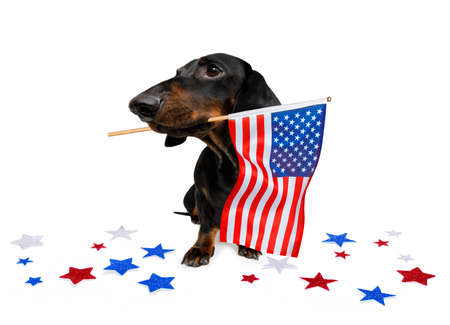 sausage dachshund dog waving a flag of usa and victory or peace fingers on independence day 4th of july with sunglasses