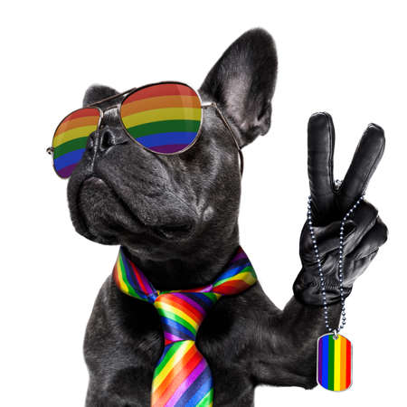 crazy funny french bulldog dog proud of human rights ,sitting and waiting, with rainbow flag tie and sunglasses , isolated on white background