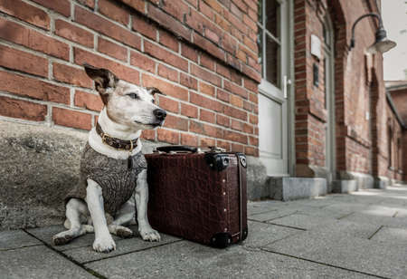 Jack russell dog abandoned and left all alone on the road or street, with luggage bag  , begging to be adopted