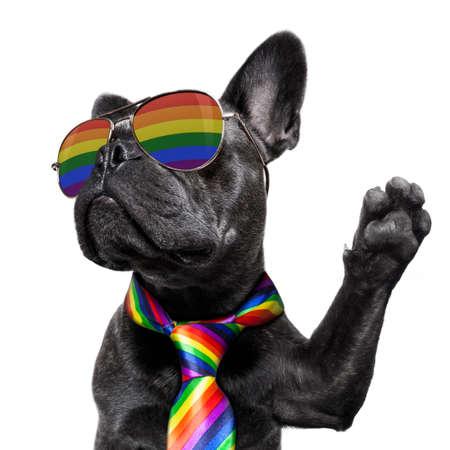 Crazy funny  french bulldog dog proud of human rights Фото со стока