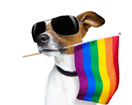 Verrückter lustiger Jack-Russell-Hund, stolz auf die Menschenrechte