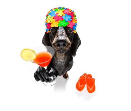 Summer vacation sausage dachshund dog with rubber duck and flip flops wearing bath cap