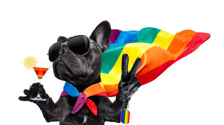 Fairy  funny  french bulldog  dog proud of human rights waving  with lgbt rainbow flag and sunglasses