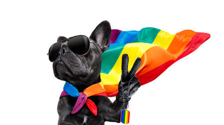 Fairy  funny gay french bulldog  dog proud of human rights waving  with lgbt rainbow flag and sunglasses