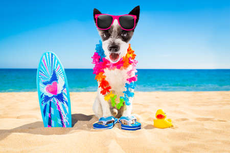 Cane che indossa occhiali da sole con una tavola da surf in spiaggia Archivio Fotografico