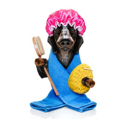 Hund mit Duschhaube, Luffa und Körperbürste