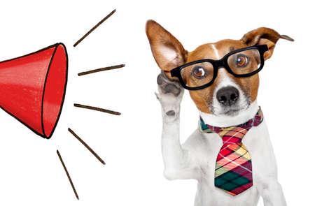 Business dog listening to an announcement from a big megaphone Standard-Bild - 126252167