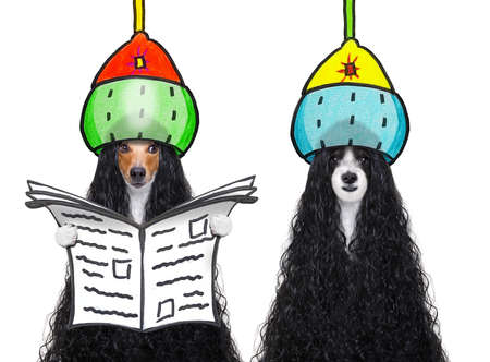 Dogs at a pet salon getting a perm while reading newspaper on isolated white background 스톡 콘텐츠