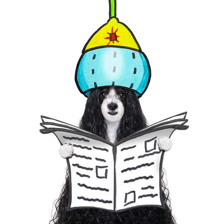 Dog in pet salon getting a perm and reading newspaper isolated on white background