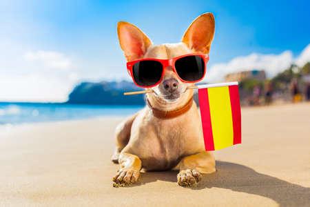 Coole chihuahua die op het strand rust met een vlag van Spanje Stockfoto