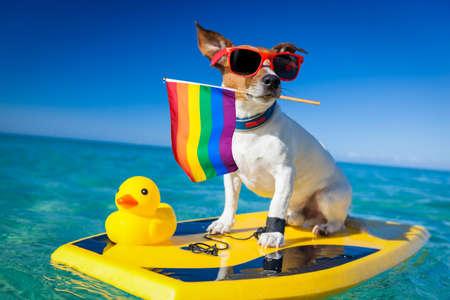 Chien avec des lunettes de soleil et un drapeau coloré dans la bouche sur une mini planche de surf dans l'eau