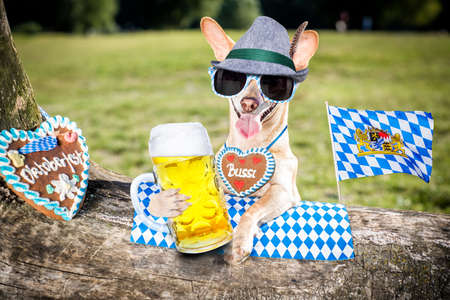 bavarian chihuahua dog holding a beer mug outdoors by the river and mountains , ready for the beer party celebration festival in munich