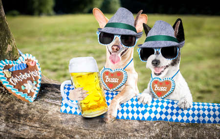 bavarian couple of  dogs  holding  a beer mug  outdoors by the river and mountains  , ready for the beer party celebration festival in munich Фото со стока