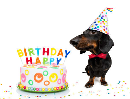 Chien teckel ou saucisse affamé d'un gâteau d'anniversaire joyeux avec des bougies, portant une cravate rouge et un chapeau de fête, isolé sur fond blanc