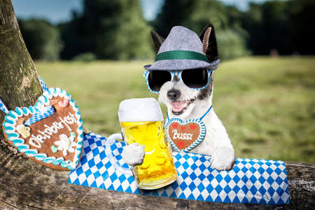 bavarian poodle  dog  holding  a beer mug  outdoors by the river and mountains  , ready for the beer party celebration festival in munich Фото со стока