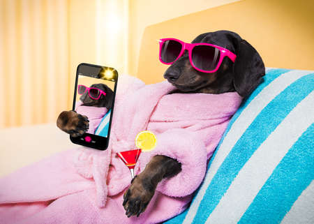 cool funny  sausage  dachshund dog resting and relaxing in   spa wellness salon center ,wearing a  pink bathrobe and fancy sunglasses, with martini cocktail, taking a selfie with smartphone telephone phone