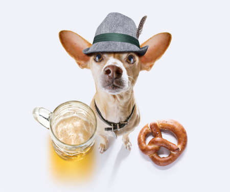 Bavarian chihuahua  dog with  gingerbread and  mug  isolated on white