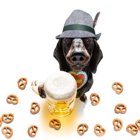 Bavarian dachshund or sausage  dog with  gingerbread and  mug  isolated on white Фото со стока