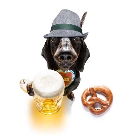 Bavarian dachshund or sausage  dog with  gingerbread and  mug  isolated on white Zdjęcie Seryjne