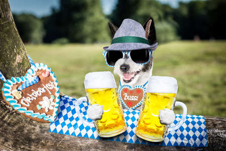 Bavarian poodle  dog  holding  a beer mug  outdoors by the river and mountains