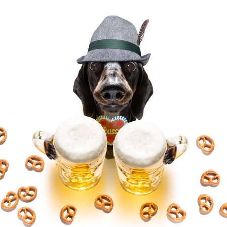 Bavarian dachshund or sausage dog with gingerbread and mug isolated on white