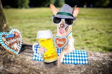 Bavarian chihuahua  dog holding  a beer mug  outdoors by the river and mountains Zdjęcie Seryjne